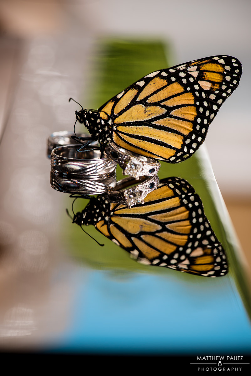 Silver Fork Winery Wedding Photos | Monarch butterflies on ring